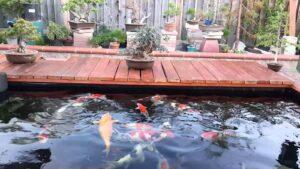 Top 10 dịch vụ thi công hồ cá koi giá rẻ uy tín tại Tphcm