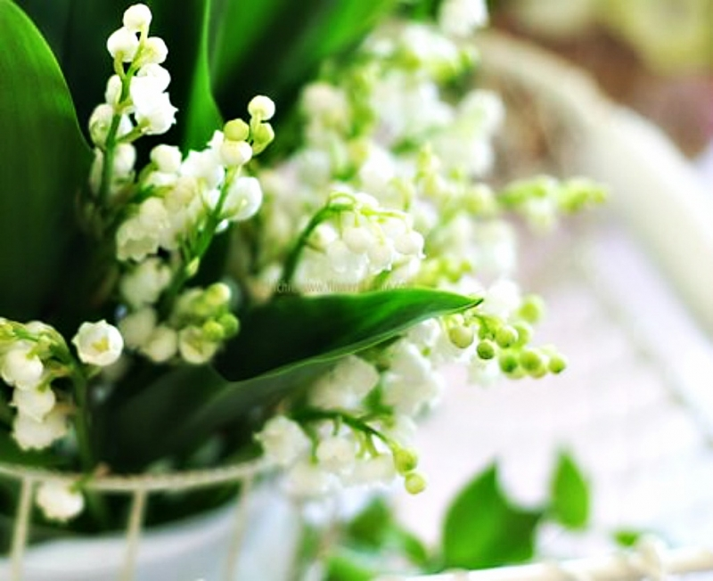 Top 20 Loài hoa đẹp nhất thế giới [Vẻ đẹp]